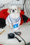 Ferocious racing dog Dwinjang.