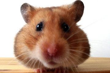 070521_hamster_02