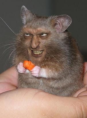 evil-hamster